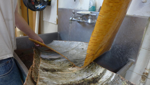 Washing sheets of birchbark in wood shop sink