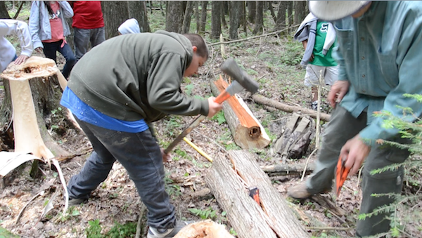 further splitting of log with wedge and sledge hammer